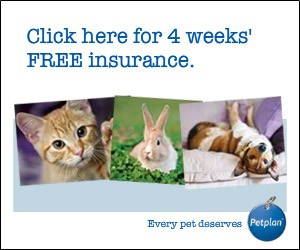 Get Pet Insurance With Pet Plan