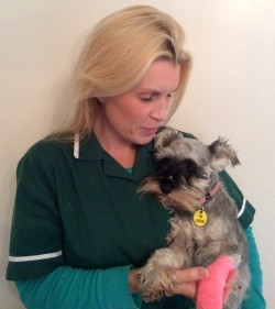 Veterinary Nurse nursing a sick dog